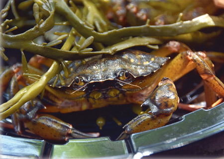 Roger Warner's Simple Green Crab Stock